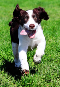 excited dog running qu...