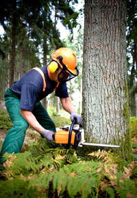 logger sawing tree in forest