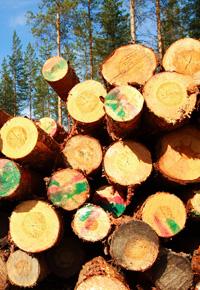 pile of freshly cut trees