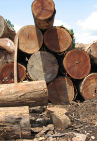stack of teak logs