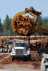loading logging truck