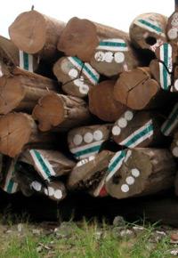 Pile of Teak logs