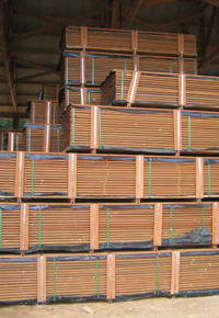 Stacks of Ipe drying