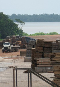 bolivian lumber yard