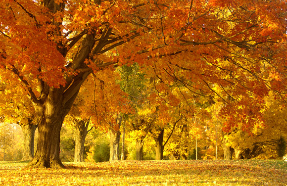 beautiful fall foliage