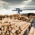 What Factors Determine the Price of Lumber?