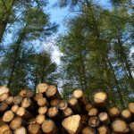 Good News for Rainforests: Green Building with Exotic Lumber, Part 2