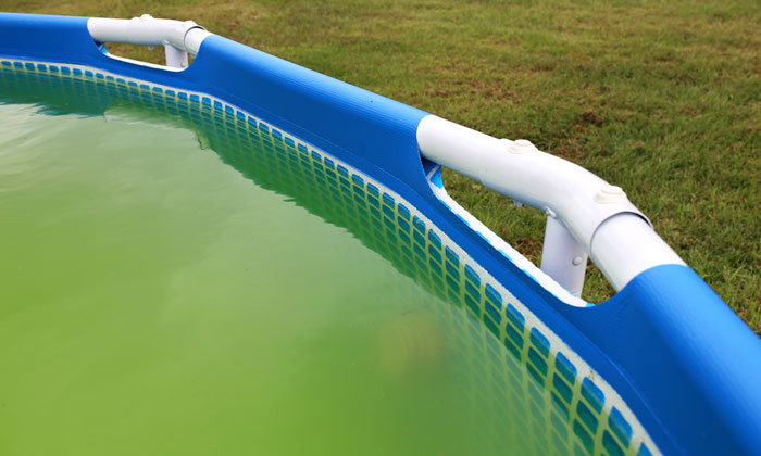 dirty green swimming pool water