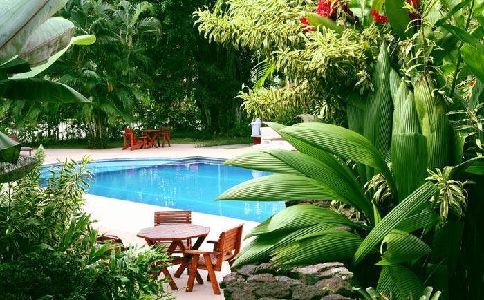 Lush greenery surrounding backyard swimming pool